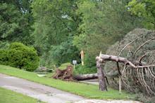 Tornado Storm Damage Of Fallen Trees And Debris