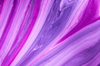 canvas print picture - Abstract Purple Acrylic pour Liquid marble surfaces Design.