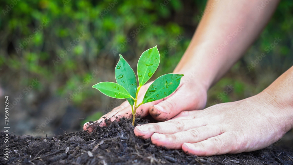 Fototapety, obrazy: New life of young plant seedling grow in black soil. Gardening and environmental saving concept. People taking care of early plantation.