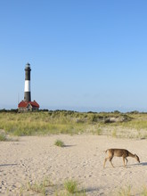 A Deer Roaming On The Sand In ...
