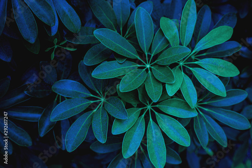 Wall mural - abstract dark green leaf texture, nature background