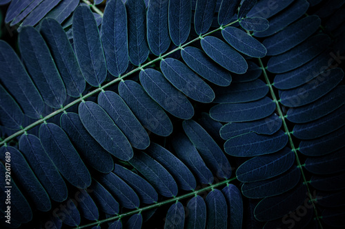 Fototapete - tropical leaf, abstract green leaf texture, nature background