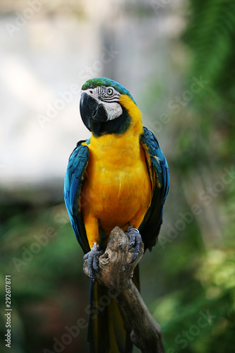 Photo Colorful Macaw bird at tree branch in morning sunlight on nature background