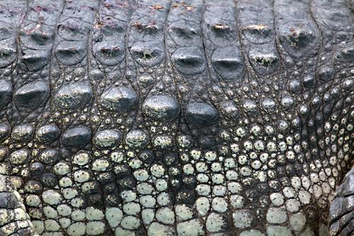 Foto op Plexiglas Krokodil Crocodile skin.