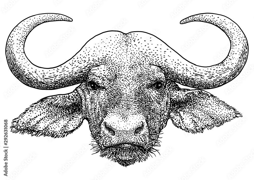 Fototapeta African portrait buffalo illustration, drawing, engraving, ink, line art, vector