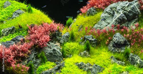 Naklejki akwarium  piekne-tropikalne-aqua-scape-zielone-akwarium-naturalne-tropikalna-kolorowa-ryba-w-akwarium