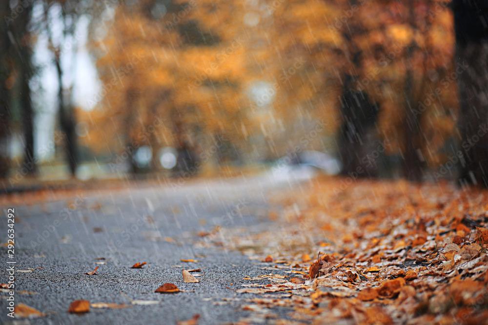 Fototapeta Autumn rain in the park