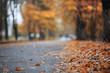 Leinwandbild Motiv Autumn rain in the park