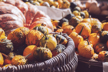 Bunch Of Decorative Mini Pumpkins And Gourds In Baskets On Farmers Market; Autumn Background