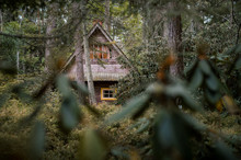 Abandoned Wooden House In Wood...