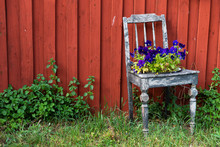 Old Chair With Flowerpot And Blooming Summer Flowers In Front Of The Red Wall Of A Swedish Wooden House. Scandinavian Summer Motif!