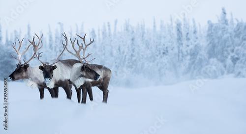 In de dag Hert Big male deers in winter forest