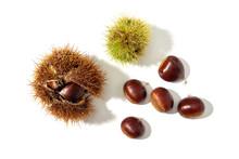 Sweet Chestnut And Husk Isolated On White Background