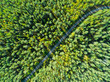 canvas print picture - Aerial view of a country road in the forest with moving cars. Beautiful landscape. Captured from above with a drone. Aerial road with car. Aerial top view forest. Texture of forest view from above
