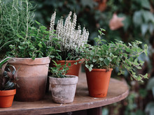 Plants In Pot. Herbs And Flowers.