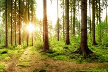 Wunderschöner Wald Mit Einem ...