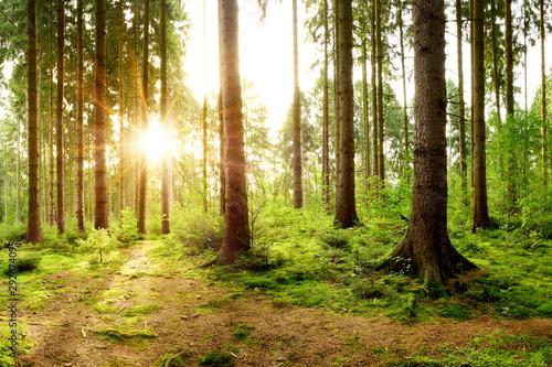 Poster Voies ferrées Wunderschöner Wald mit einem Weg und strahlender Sonne