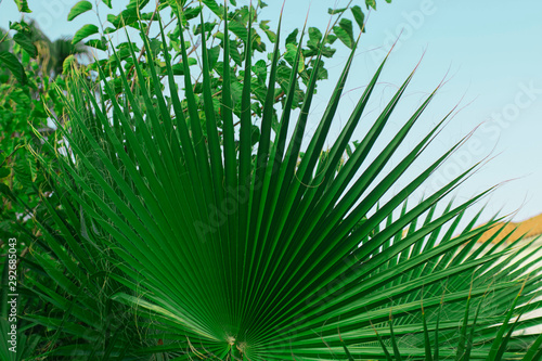 Palm green leaf isolated on the background of sky. Horizontal #292685043