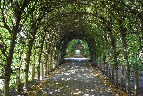 Fotografia Trellis in Garden of Snug Harbor - Beautiful Long Archway