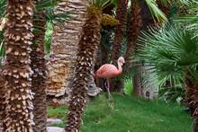 Flamingo Im Tropischen Garten ...