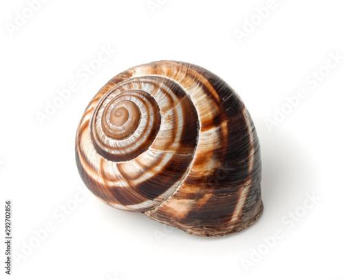 Fotomural Land snail shell