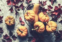 Autumn Pumpkins Harvest In Bas...