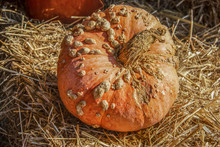Warty Decorative Orange Ugly Pumpkin Sitting On Straw Bale - Close-up