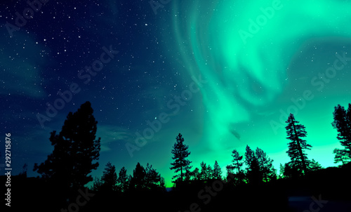 Garden Poster Green coral Northern lights aurora borealis over trees