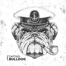 Hipster Animal Bulldog Captain...