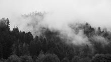 Redwood Forest Landscape In Be...