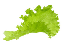 Green Lettuce Leaf Isolated Without Shadow