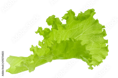 Fototapeta Green lettuce leaf isolated without shadow obraz