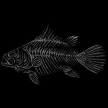 The Vector Logo Fish Skeleton ...