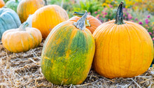 Assorted Organic Pumpkins