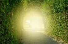 Green Tunnel Of Trees With Light At The End