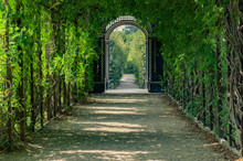 Green Tunnel Of Trees In Park