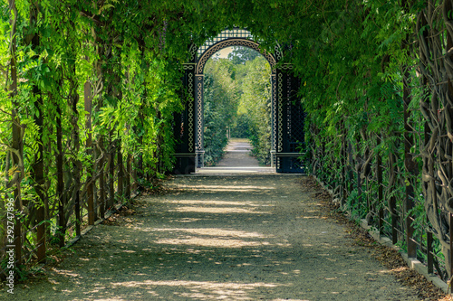green tunnel of trees in park Canvas Print
