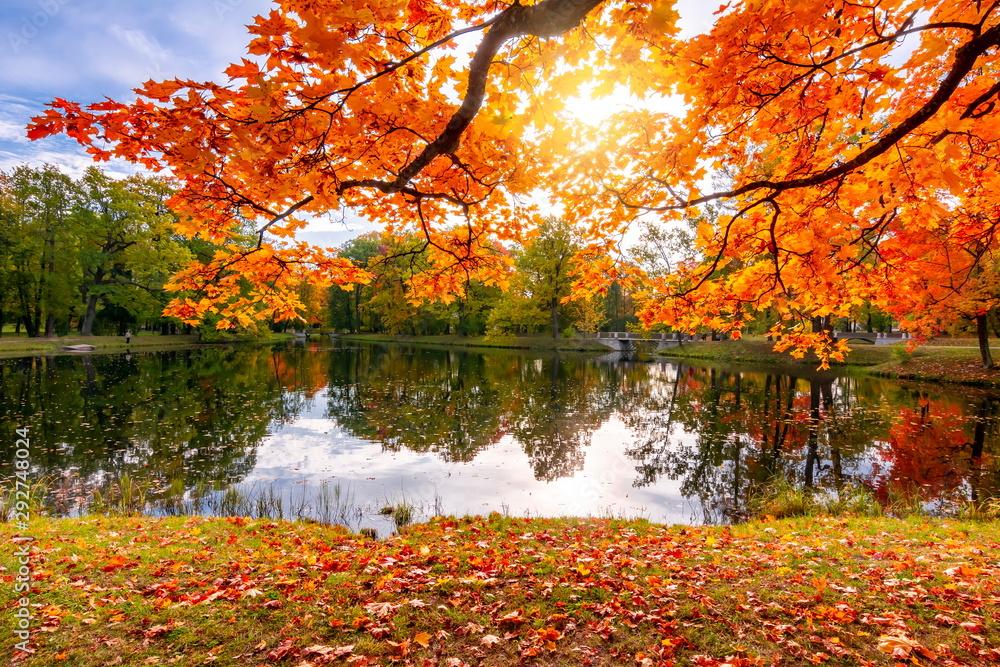 Fototapety, obrazy: Golden autumn (fall) in Alexander park, Tsarskoe Selo (Pushkin), Saint Petersburg, Russia