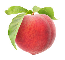 Isolated Peach. One Raw Pink Peach Hanging On A Stem With Leaves Isolated On White Background With Clipping Path