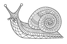 Snail Coloring Page Contour Vector Illustration For Children And Adults