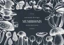 Vintage Frame Design With Culinary Mushrooms Sketches. Forest Plants Template On Chalkboard. Perfect For Recipe, Menu, Label, Icon, Packaging. Hand Sketched Mushrooms Background.