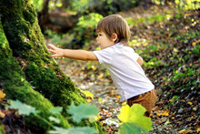 Cute Little Curious Boy Touching Old Tree Covered With Green Moss In Forest Outdoors. Inquisitive Childhood. Child Exploring The World Around.