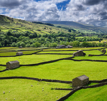 Swaledale Sheep Barns And Drystone Wall Grid On Green Pasture Land In Valley Of The River Swale Near Gunnerside Yorkshire Dales National Park