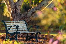 An Old Wooden Bench Underneath A Cherry Tree During Golden Hour