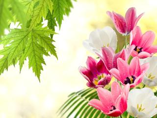 Panel Szklany Podświetlane Tulipany Image of many flowers of tulips in a garden closeup