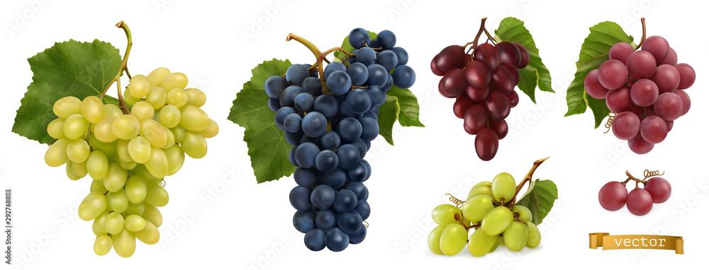 Fototapeta Wine grapes, table grapes. Fresh fruit, 3d realistic vector set