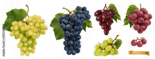Cuadros en Lienzo Wine grapes, table grapes. Fresh fruit, 3d realistic vector set