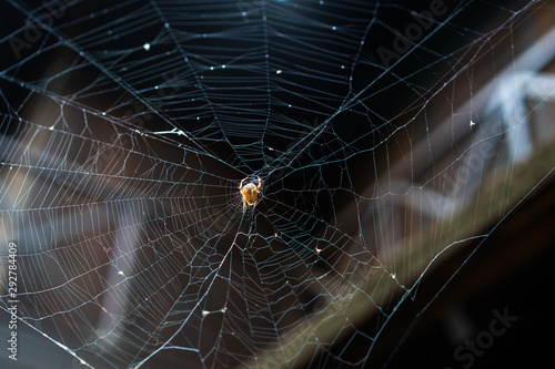 Spiderweb with large spider silhouetted against dark building Canvas Print