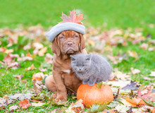 Puppy In A Warm Hat Sildit Wit...