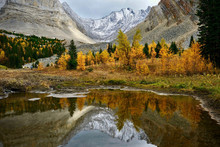Alpine Lake In Mountains With Reflections Of Autumn Larch Trees. Autumn Forest In Canadian Rockies In Kananaskis. Canmore. Alberta. Canada.